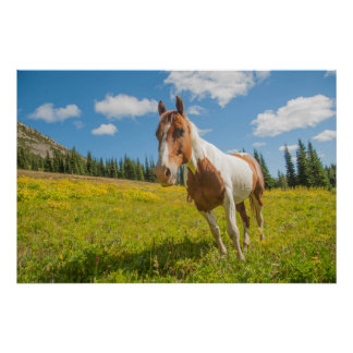 Curious horse in an alpine meadow in summer poster