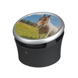 Curious horse in an alpine meadow in summer speaker