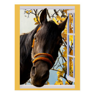 Curious Horse Looking Through a Kitchen Window Postcard