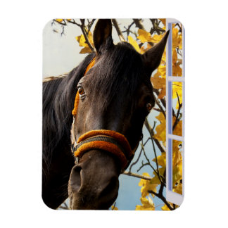 Curious Horse Looking Through The Kitchen Window Rectangular Photo Magnet