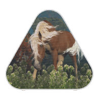 Curious Horse on a meadow Speaker