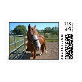 Curious Horse Postage Stamp