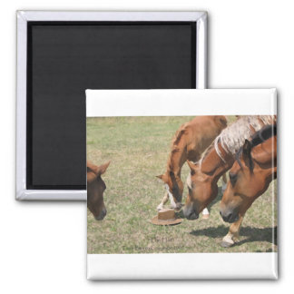 Curious Horses And Hat Refrigerator Magnets