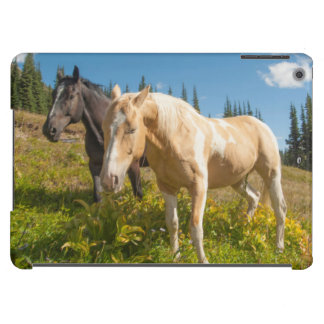Curious horses foraging on grass cover for iPad air