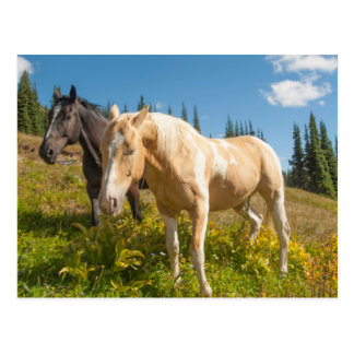 Curious horses foraging on grass postcard