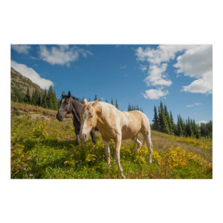 Curious horses foraging on grass poster