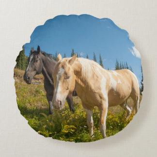 Curious horses foraging on grass round pillow