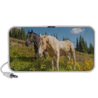 Curious horses foraging on grass notebook speaker