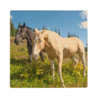 Curious horses foraging on grass wood coaster