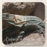 Curious Iguana; Customizable Coasters