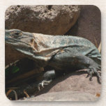 Curious Iguana Drink Coasters