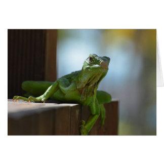 Curious Iguana Greeting Card