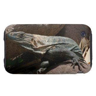 Curious Iguana iPhone 3 Tough Case