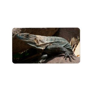 Curious Iguana Label