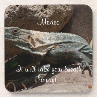 Curious Iguana; Mexico Souvenir Beverage Coaster