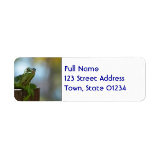 Curious Iguana Return Address Label