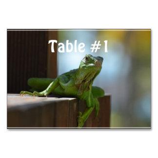 Curious Iguana Table Cards