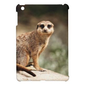 Curious iPad Mini Cases