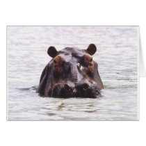 Curious Keeboko (Hippo) Card