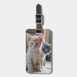 Curious Kittens Bag Tag