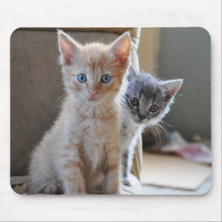 Curious Kittens Mouse Pad