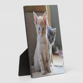 Curious Kittens Plaque