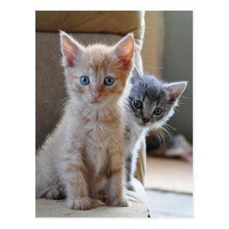 Curious Kittens Postcard