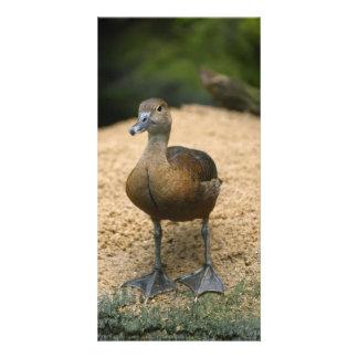 Curious little duck photo card