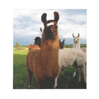 Curious Llama Note Pad
