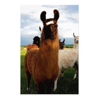 Curious Llama Stationery