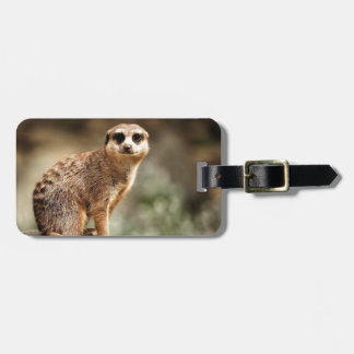 Curious Luggage Tag