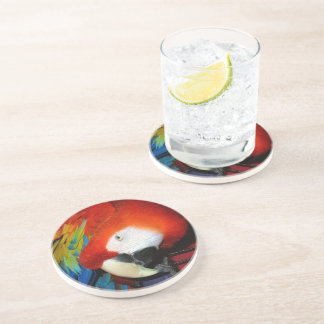 Curious Macaw Coaster