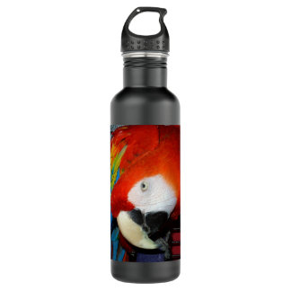 Curious Macaw Water Bottle