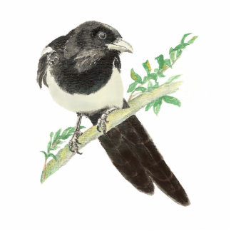 Curious Magpie, Looking at you, Humor Bird Cutout