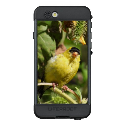 Curious Male American Goldfinch LifeProof NÜÜD iPhone 6s Case
