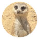 Curious Meerkat Sticker