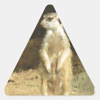 Curious Meerkat Triangle Sticker