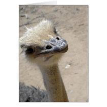 Curious ostrich card