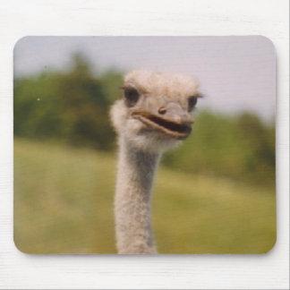 Curious Ostrich Mouse Pad