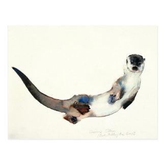 Curious Otter 2003 Postcard
