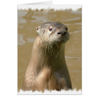 Curious Otter Greeting Card