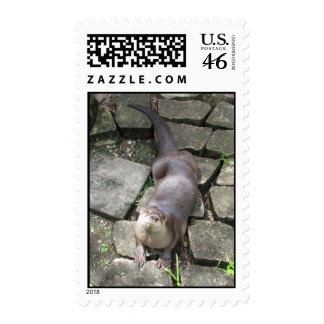 Curious Otter Stamp