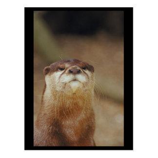 Curious Otter Postcard