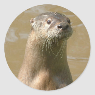 Curious Otter Sticker