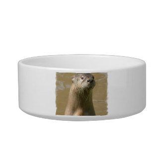 Curious Otters Pet Bowl