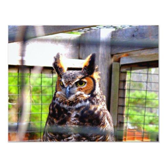 Curious Owl Card