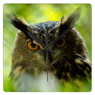 Curious  Owl Clock