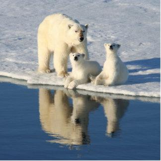 Curious Polar Bear Family Photo Cutout