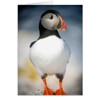 Curious Puffin Greeting Card