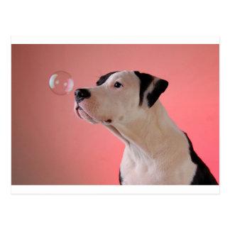 Curious pup postcard